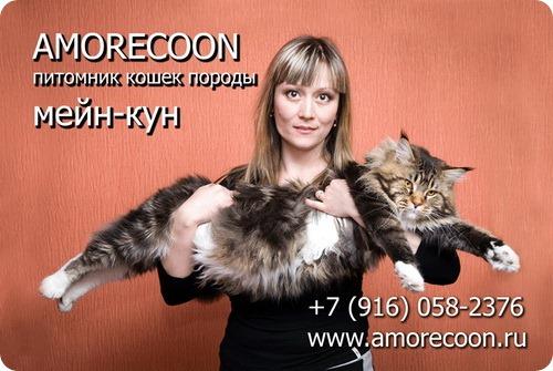 Питомник AMORECOON
