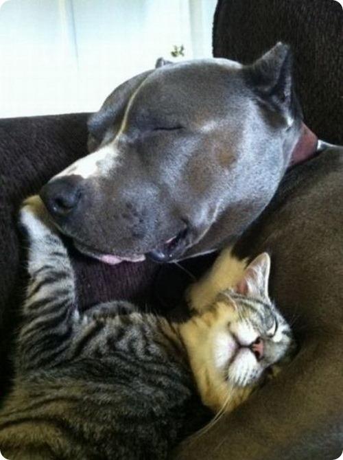Как кошка с собакой - 22