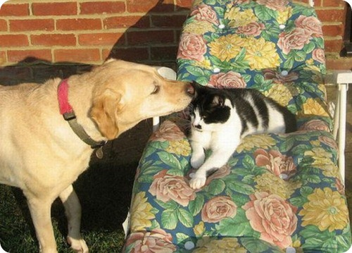 Как кошка с собакой – 23