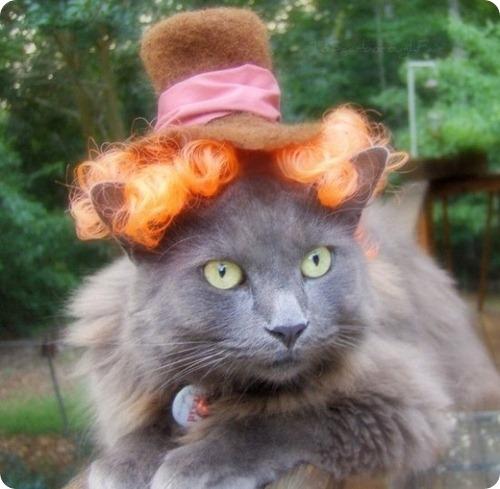 Новая коллекция головных уборов от дизайнера кошачьей одежды