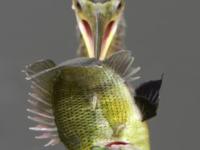 Рыбный шашлычок
