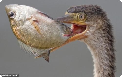 Кебаб из рыбы