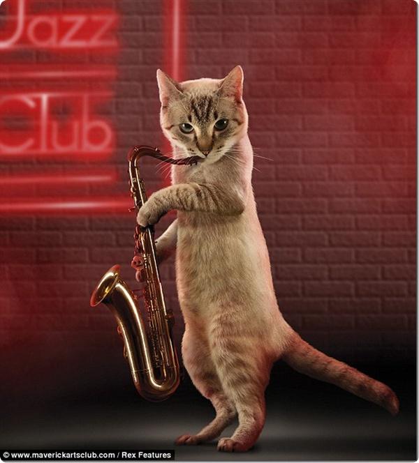 Коты-музыканты!