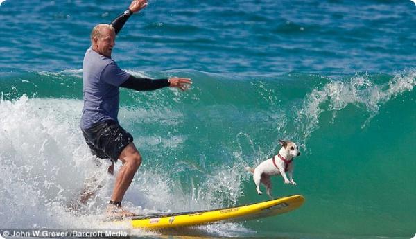 Собаки в Калифорнии любят серфинг
