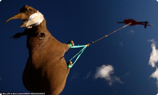 Летающие носороги!