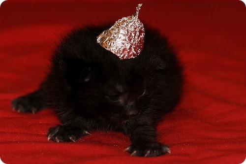 Приюти пришельца, Дорогой Петербуржец !