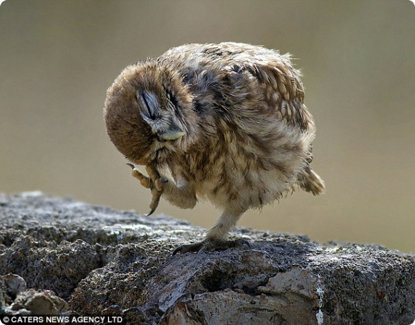 Танец маленькой совы