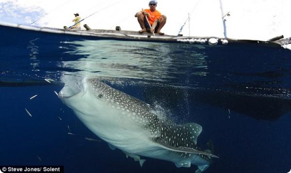 Китовые акулы и бесплатный обед