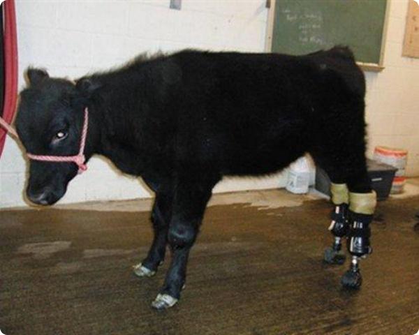 Активная жизнь животных, получивших протезы