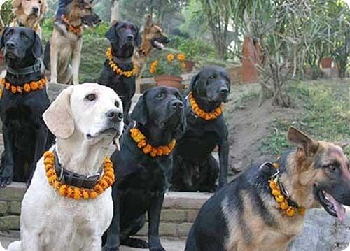 Национальный день собак в Непале