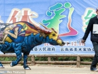 Живопись на коровах по китайски!