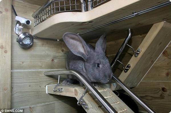 Особняк для кроликов!