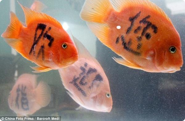 Татуировки для рыбок?