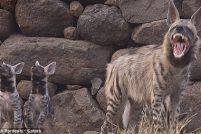 Самка полосатой гиены и её потомство