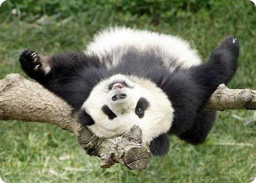 В список женщин Лица 2011 года включили панду
