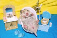 Персональный санузел для хомячка