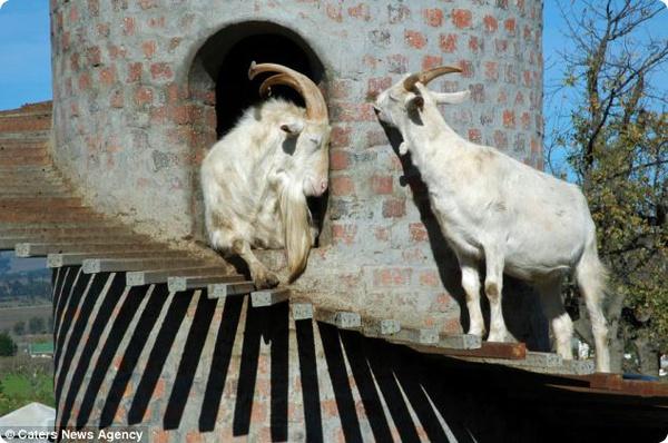 Башня для коз