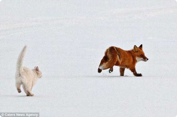 Сторожевой собаки не нужно: есть кот