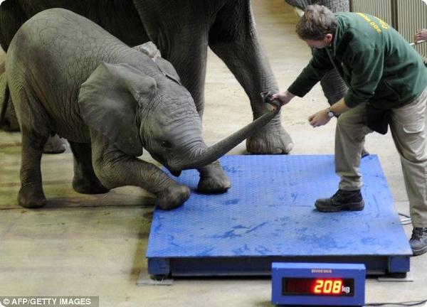 Слонёнок запомнит эти издевательства
