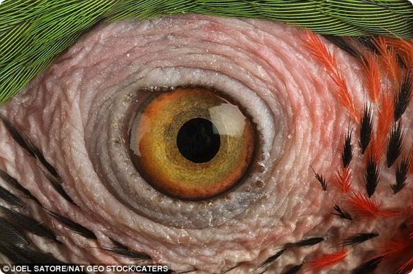 Чьи глаза интереснее