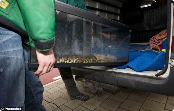 На вилле в Бельгии полиция нашла 11 крокодилов и аллигатора