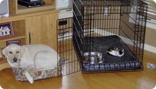 Как кошка с собакой – 24