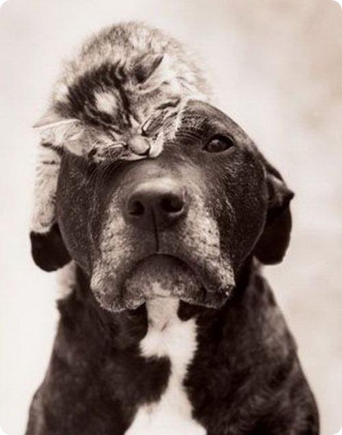 Как кошка с собакой–25