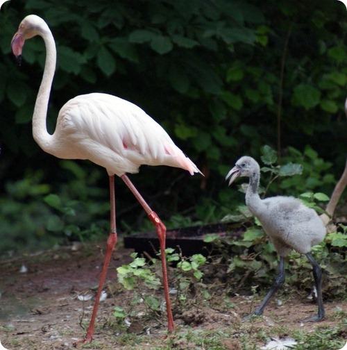 Фламинго из Йоханнесбурга