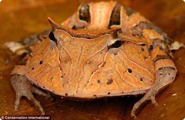 В джунглях Южной Америки открыто свыше 40 новых видов!