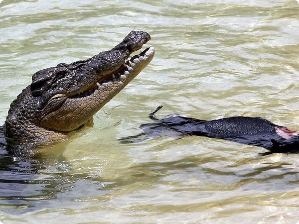 Дети Стивена Ирвина учавствовали в шоу с крокодилом Чарли