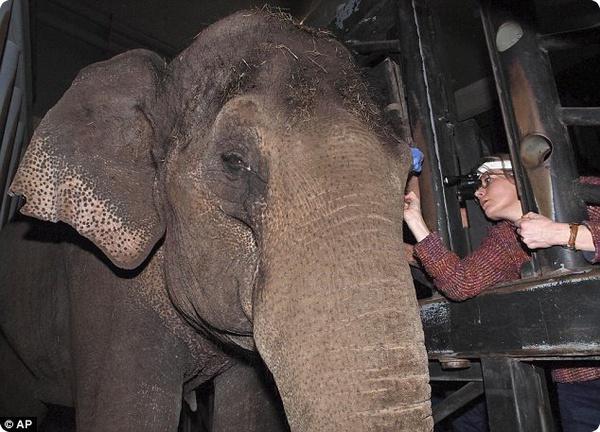 Слонихе из зоопарка Artis поставили контактную линзу