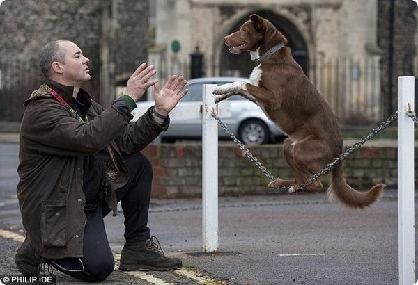 Звезда YouTube пёс Оззи