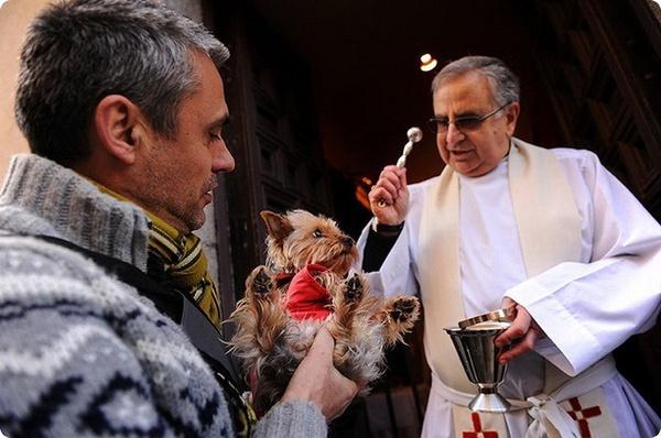 В день Святого Антония благословляют животных