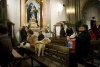День Святого Антония в Мадриде
