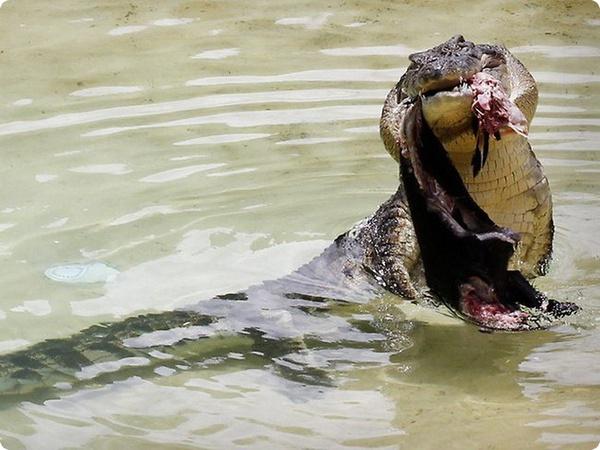 Дети Стивена Ирвина учувствовали в шоу с крокодилом Чарли