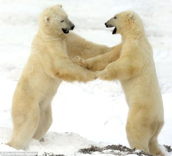 Я пригласить хочу на танец