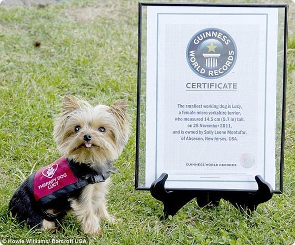 Самую маленькую служебную собаку внесли в Книгу рекордов Гиннеса
