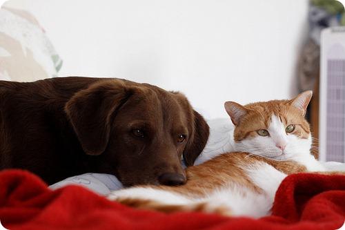 Как кошка с собакой – 26