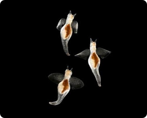 Двенадцать снимков Рождественского планктона