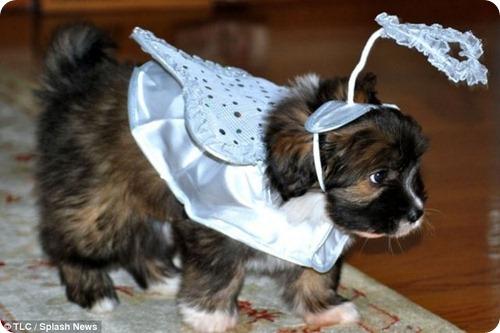 Вот это любовь: 50 тысяч долларов за клонирование собаки