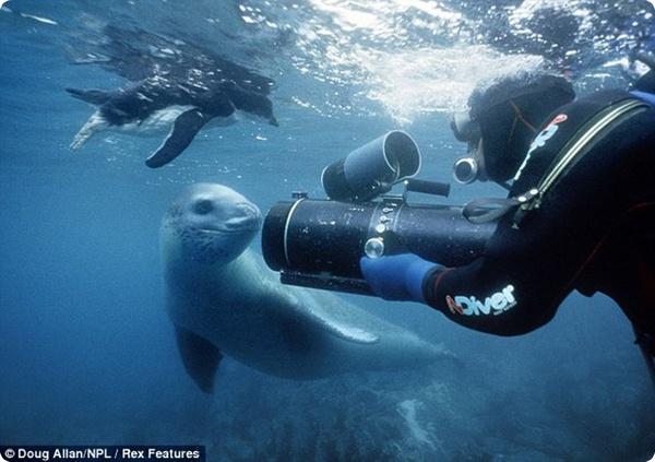 Двуличный морской леопард