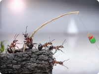 В коллективной памяти муравьев хранится запах врагов
