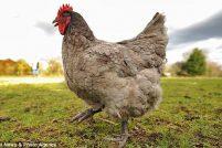 Прогноз погоды по куриным яйцам