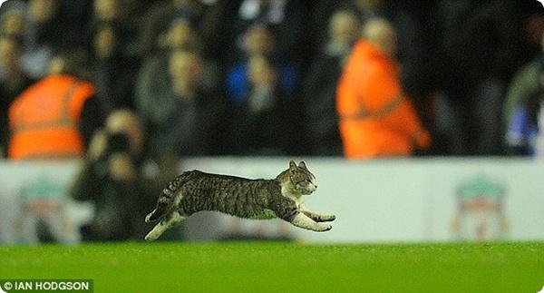 Кот принял участие в матче между Ливерпулем и Тоттенхемом!