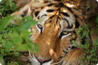 Трагические истории из жизни с дикими животными