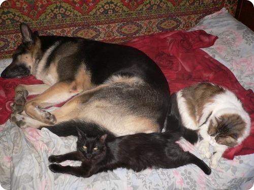 Как кошка с собакой – 27