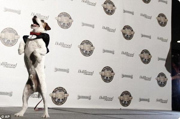 В Голливуде прошла церемония «Золотой ошейник»