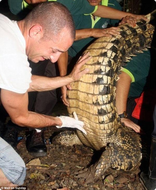 Охота на крокодила