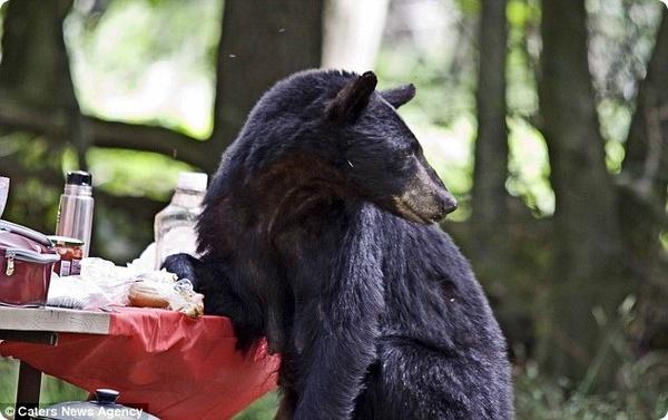 Пикничок для медведя