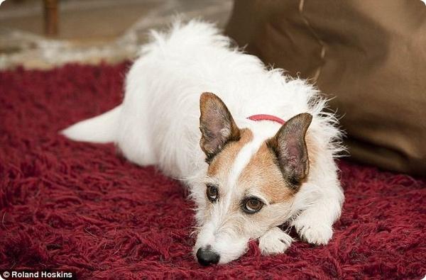 Пресса взяла интервью у англичанина, спасшего своего пса
